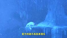 熊出没之雪岭熊风 主题曲MV《你从未离去》(演唱:白挺)