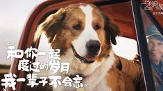 一条狗的使命2 饭制狗狗视频