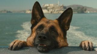 报告狄格思 我们有只落水狗了