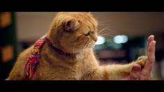 一只叫做鲍勃的流浪猫 中文预告