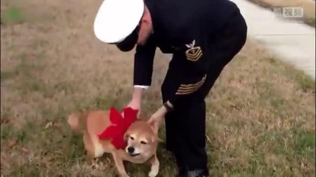 狗狗是士兵忠实的朋友,狗狗搞笑视频_高清