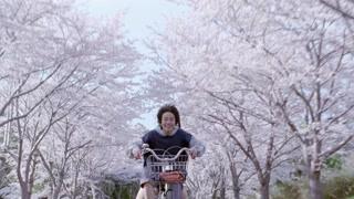 最美的不是樱花隧道 而是你微笑的脸庞