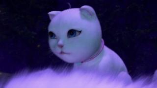 你见过猫咪吃醋吗?说好的建国后动物不能成精呢!