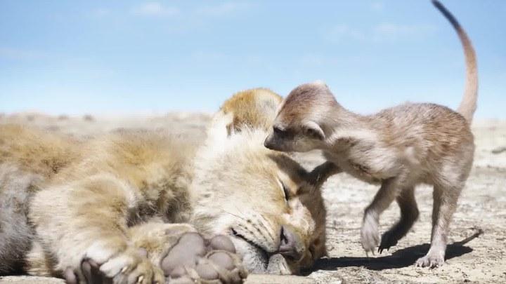 狮子王 片段1