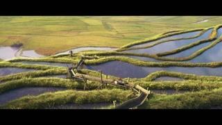 稻田滑滑梯? 多美的画面啊
