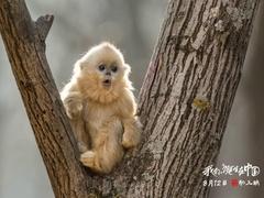 《我们诞生在中国》配音特辑 周迅模仿赵忠祥