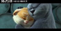 猫与桃花源(许巍《无人知晓》MV)