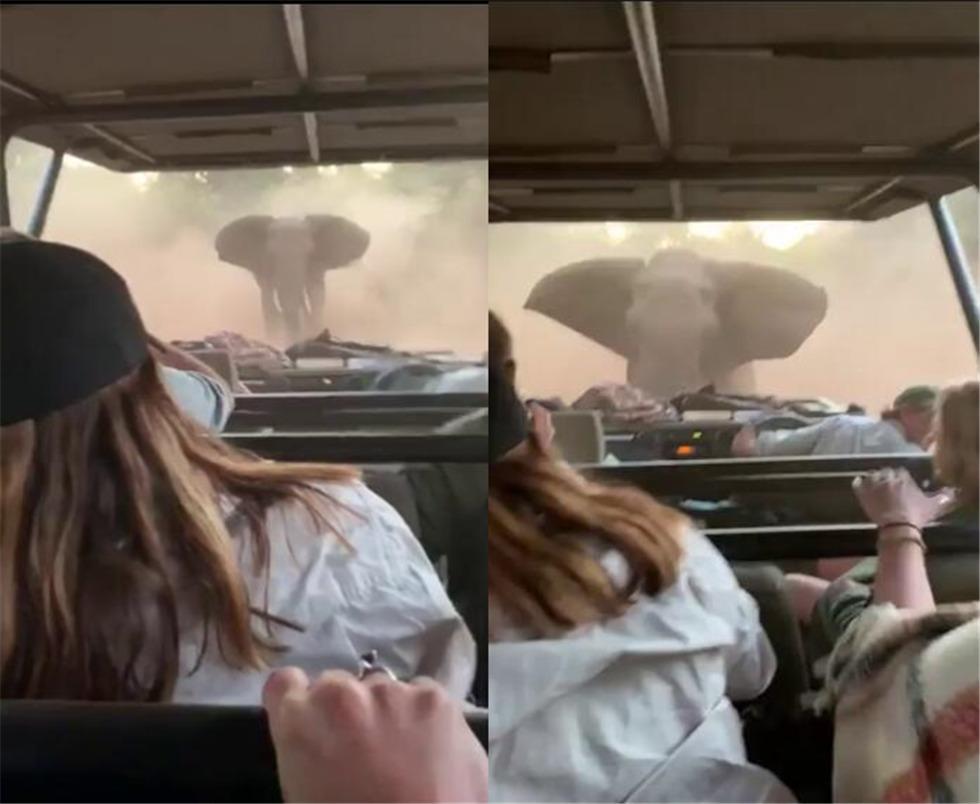 南非大象发怒冲击吉普车 司机镇定倒车带游客脱险境