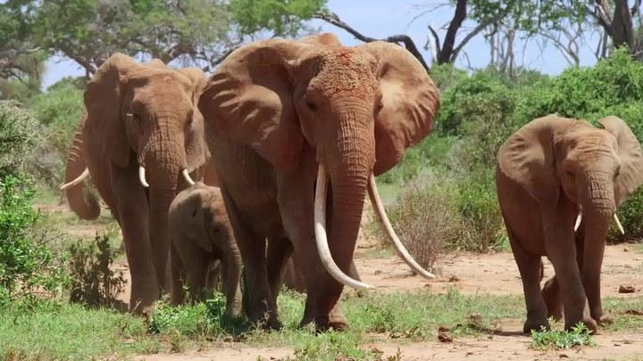 大象女王 预告片