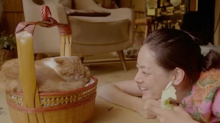 租赁猫 日本预告片2