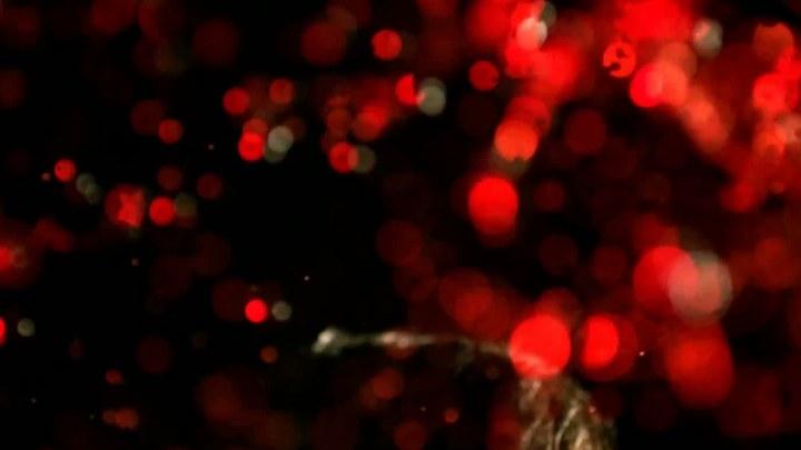 你躯体之泪的诡异颜色 加拿大先行版:多伦多电影节
