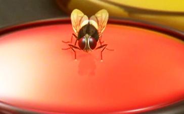 《功夫小蝇》精彩预告 男子化身功夫苍蝇保卫爱人