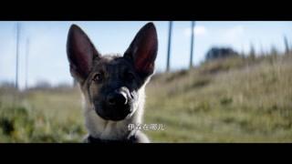 贝利的狗生第二次轮回竟然变成了女生