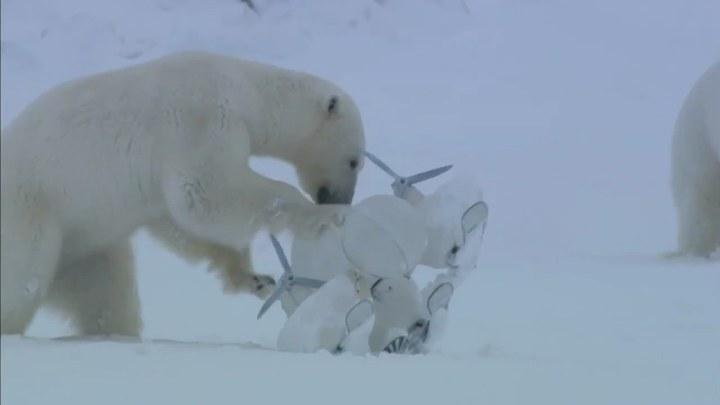 北极 片段6:Curious Polar Bears