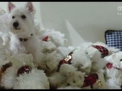 我的狗狗我的爱内地版预告片