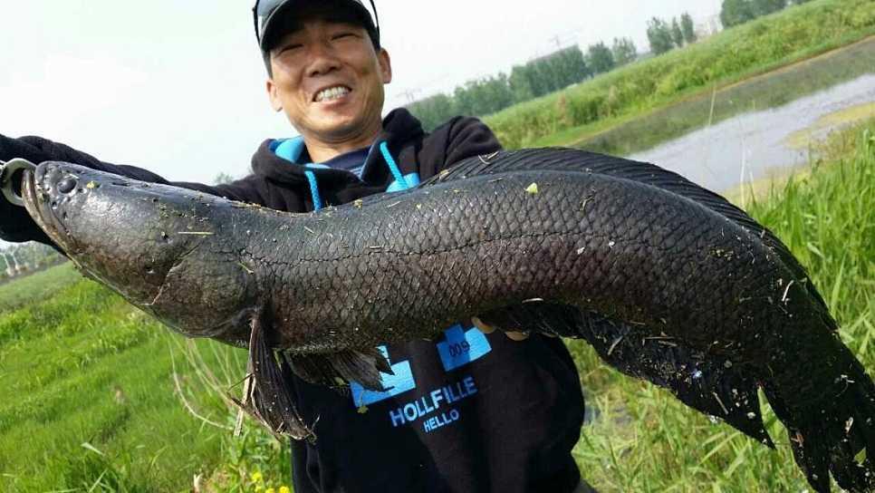 """美国人害怕的""""地狱鱼"""",为何成中国最喜欢的鱼种?网友:吃到它绝种"""