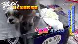"""《破风》拍摄花絮 崔始源雨中勇救""""汪星人"""""""