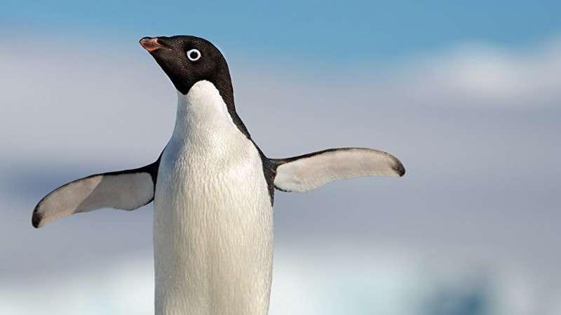 《企鹅》预告片 迪士尼生态纪录片再现奇妙自然