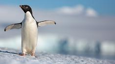 企鹅 预告片