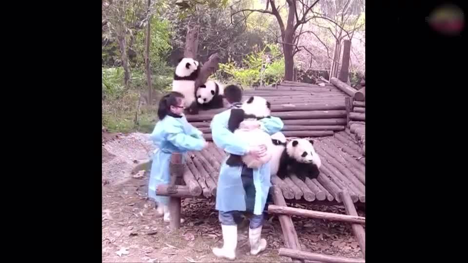 各种搞笑有趣的动物小视频