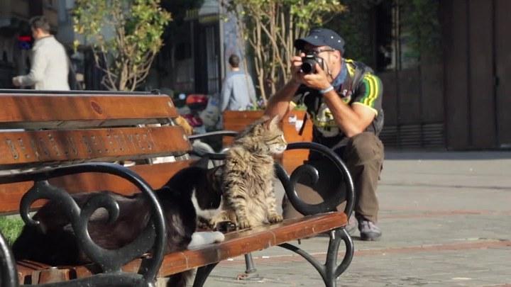爱猫之城 MV1:推广曲《猫语》 (中文字幕)