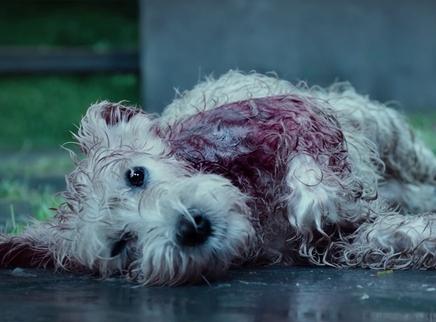 《狗眼看人心》社会向视频 没有有问题的狗,只有有问题的主人