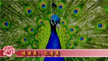 傣族舞:孔雀舞