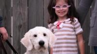 泪目!《一条狗的使命2》饭制视频,狗狗就是我们的天使