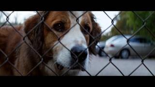 变成了流浪狗后 竟然遇到了命中注定的那只狗?