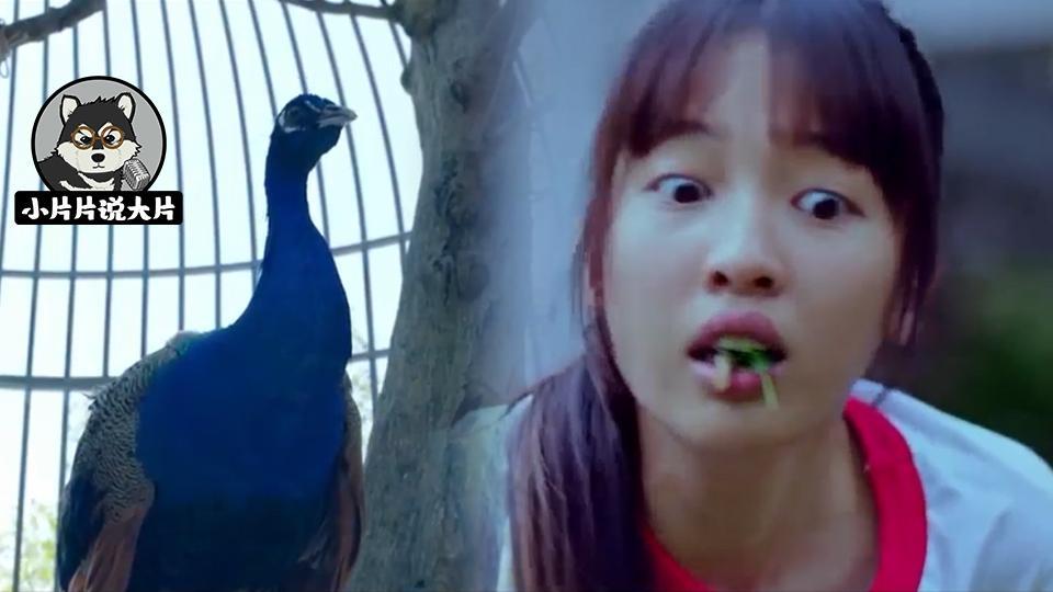 女生不受控制的吃草,甚至浑身长满羽毛,只因与孔雀做了交易?
