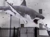 《鲨鱼风暴》中文预告片 天降食人鱼好莱坞沦陷