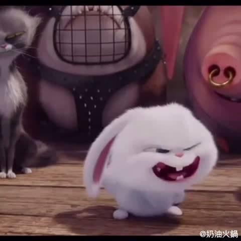 表情 靖表情包兔子 萌宠大作战兔子 大笑表情包兔子 小兔子简笔画 游戏屋 表情