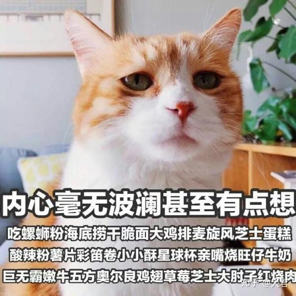 表情 猫狗表情包 狗表情包 猫表情包 猫狗表情包带字 奇奇下载网 表情
