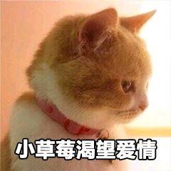 表情 小猫咪 小草莓渴望爱情 妈蛋表情网手机版 表情