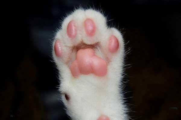 表情 猫爪子 猫爪子简笔画 猫爪子牵手表情包 猫爪子 猫爪子可以剪吗