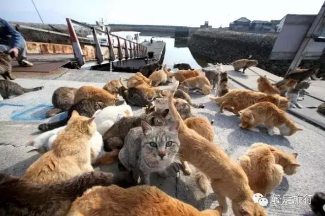 表情 猫岛攻略 这里被喵星人占领,快交出你的小鱼干 搜狐旅游 搜狐网 表情