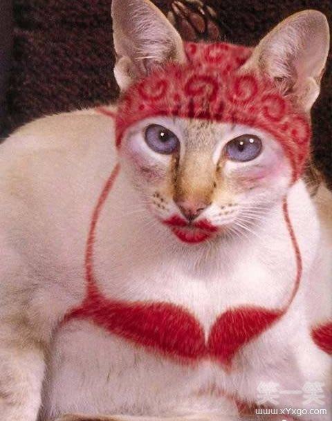 表情 猫咪搞怪表情集合 笑一笑 表情