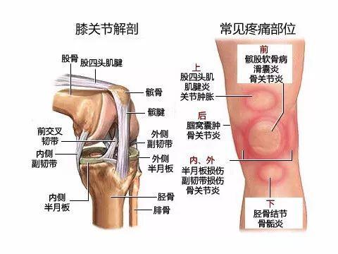 韧带 副韧带 内侧 一外侧 内、外 半月板半月板损伤 副韧带损伤 骨关