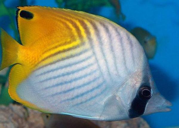表情 地球上10大最漂亮的热带鱼,小丑鱼和神仙鱼上榜 鹦鹉鱼 神仙鱼  表情