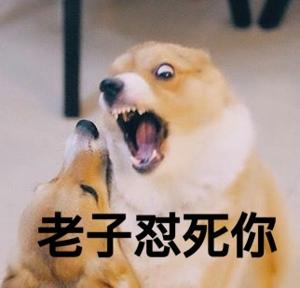 表情 可爱的狗狗最新qq表情图片大全带字聊天表情包下载 奇思屋 表情