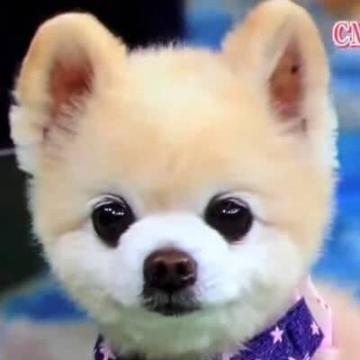那么多狗还是你最可爱表情包-表情 动物表情节界的扛把子,一猫一