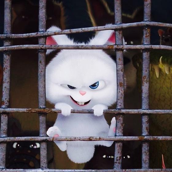 表情 爱宠大机密兔子表情包爱宠大机密小白兔图片下载 励志图片 兴发娱乐  表情