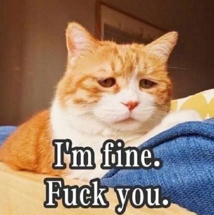 表情 不如吸猫,谈恋爱不如吸猫 表情