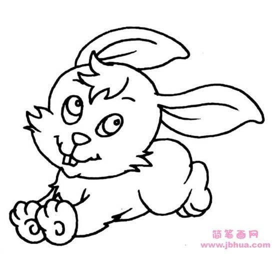 表情 幼儿动物简笔画 可爱的小白兔 简笔画网 表情