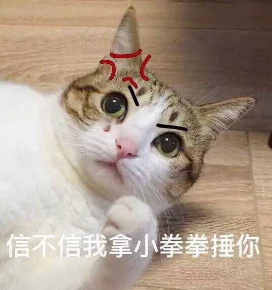 表情 猫咪举手投降表情包 第2页 一起QQ网 表情