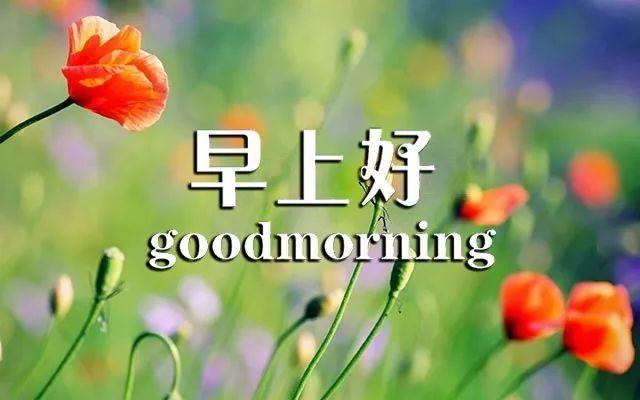 表情 早晨好表情清晨早安问候语祝福话语 表情图片