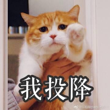 表情 弱小无助表情包 害怕表情包 幼小可怜又无表情 弱小可怜又无助猫图片  表情