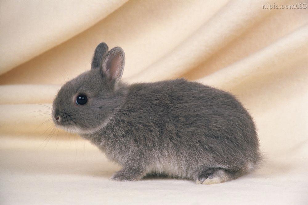 表情 小灰兔子脑壳疼表情包 魔道祖师兔子 灰色兔子表情包 简笔画兔子