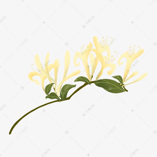 表情 金银花黄色手绘素材图片免费下载 千库网 表情