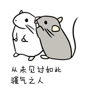 表情 两只老鼠说悄悄话表情 从未见过如此骚气之人 九蛙图片 表情